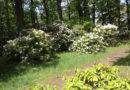 Baumpflegearbeiten am und im Rhododendronpark Grünewalde