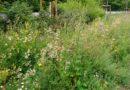 Wohlfühloase für städtische Kräuter und Insekten