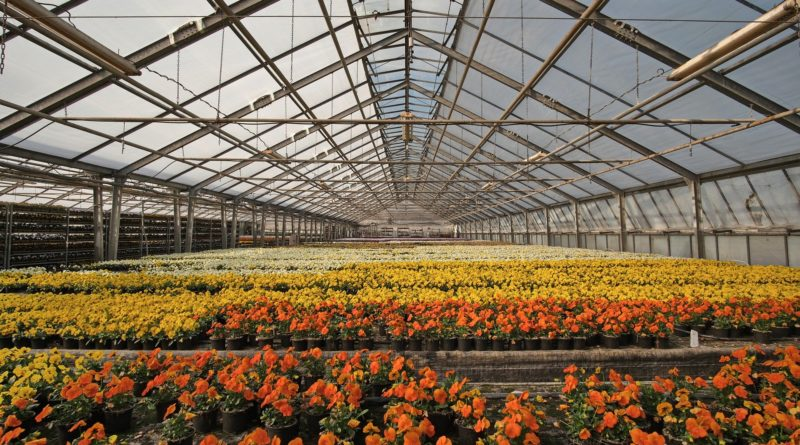 Ab Montag Blumenläden, Gartenfachmärkte und Friseure offen – das sind die Regeln!